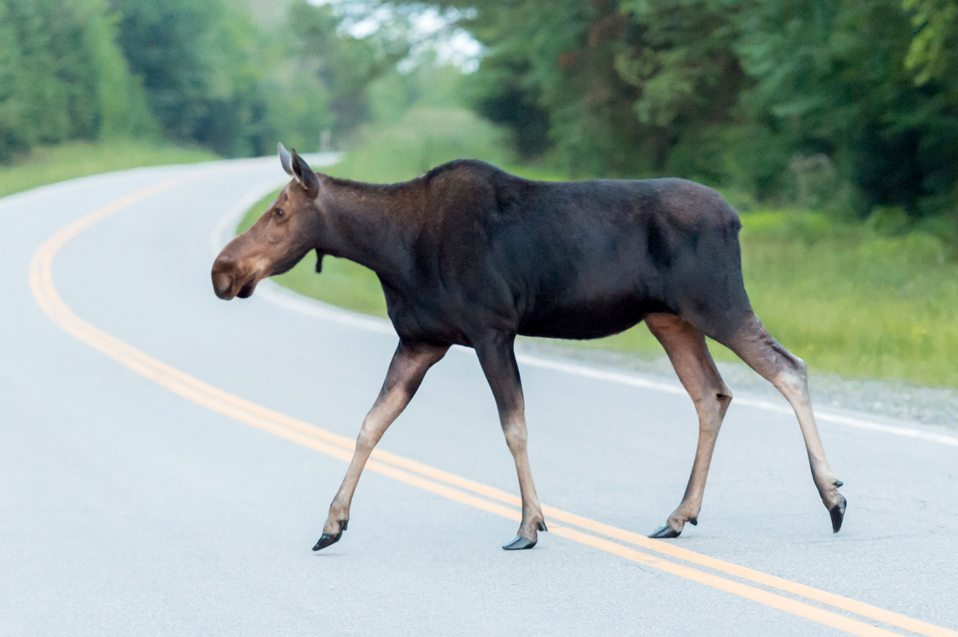 moose, moose alley, pittsburg, new hampshire