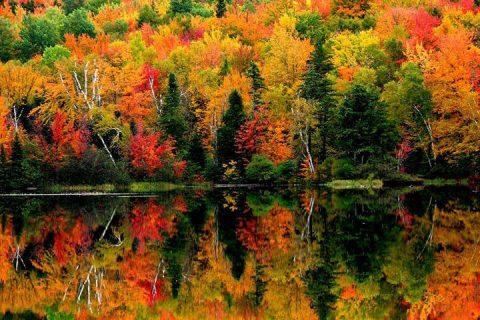 fall, autumn, fall foliage, new hampshire, northern new hampshire, foliage, peak foliage